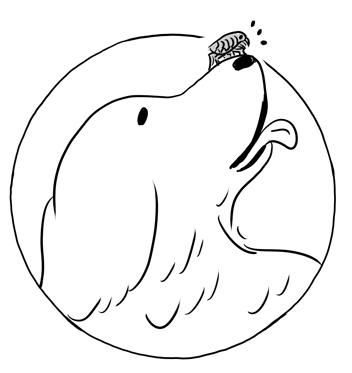nomi illustration1